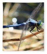 Sunning Blue Dragonfly Square Fleece Blanket