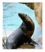 Sunning Sea Lion Fleece Blanket