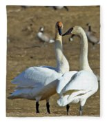 Swan Pair Fleece Blanket