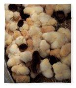 Sweet Baby Chicks For Sale Fleece Blanket