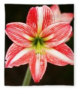 Sweet Lillian Amaryllis Fleece Blanket