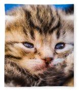 Sweet Small Kitten  Fleece Blanket