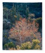 Sycamore And Saguaro Cacti, Arizona Fleece Blanket