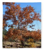 Sycamore Tree In Fall Colors Fleece Blanket