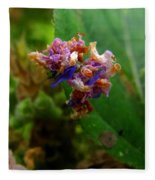 Synchlora Aerata Caterpillar 2 Fleece Blanket