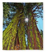 Tahoe Trees - Lake Tahoe By Diana Sainz Fleece Blanket