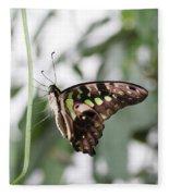 Tailed Jay Butterfly Fleece Blanket