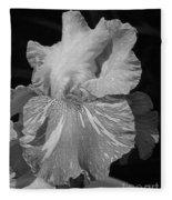 Tall Bearded Iris Named Saharan Sun Fleece Blanket