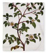 Tea Branch Of Camellia Sinensis Fleece Blanket