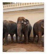 Temple Elephants Maharaja's Palace India Mysore Fleece Blanket