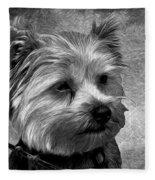 Terrier - Dog - Playing With Light Fleece Blanket