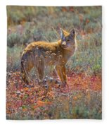 Teton Coyote Fleece Blanket