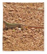 Texas Striped And Spotted Whiptail Lizard Fleece Blanket