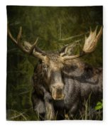 The Bull Moose Fleece Blanket