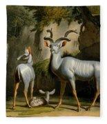 A Kudus Or Kudu Fleece Blanket