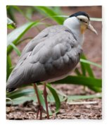 The Masked Lapwing Vanellus Miles Previously Known As The Mask Fleece Blanket