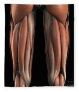 The Muscles Of The Upper Legs Rear Fleece Blanket