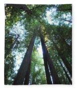 The Redwood Giants Fleece Blanket