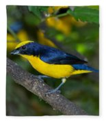 Thick-billed Euphonia Fleece Blanket
