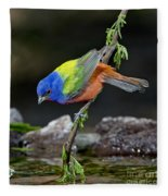 Thirsty Painted Bunting Fleece Blanket