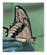 Thoas Swallowtail Butterfly Fleece Blanket