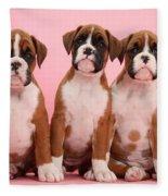 Three Boxer Puppies Fleece Blanket