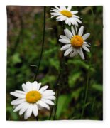 Three Daisies Fleece Blanket