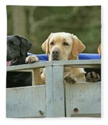 Three Kinds Of Labradors Fleece Blanket