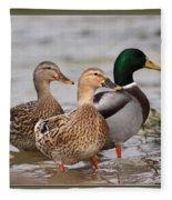 Three Mallards Card - Ducks Fleece Blanket