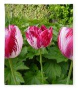 Three Pink Rembrandt Tulips Fleece Blanket