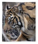 Sumatran Tiger-5418 Fleece Blanket