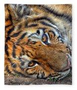 Tiger Nap Time Fleece Blanket