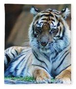 Tiger Posing Fleece Blanket
