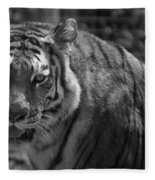 Tiger With A Fixed Stare Fleece Blanket