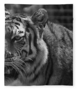 Tiger With A Hard Stare Fleece Blanket