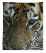 Tiger You Looking At Me Fleece Blanket
