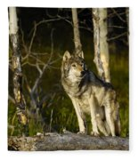 Timber Ghost Wolf Fleece Blanket