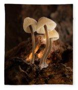 Tiny Toadstools Fleece Blanket