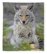 Tk0607, Thomas Kitchin Coyote In Spring Fleece Blanket
