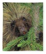 T.kitchin 14107c, Porcupine In Spruce Fleece Blanket