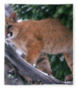 T.kitchin 15274d, Cougar Kitten Fleece Blanket