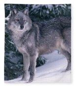 T.kitchin, 19821c Gray Wolf, Winter Fleece Blanket