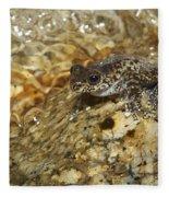 Torrent Treefrog Aka Waterfall Frog Fleece Blanket