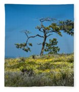 Torrey Pine On The Cliffs At Torrey Pines State Natural Reserve Fleece Blanket