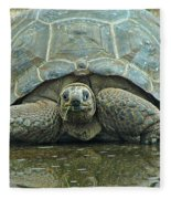 Tortoise Fleece Blanket