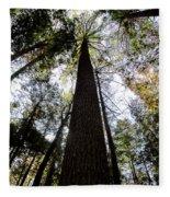 Towering Timber Fleece Blanket