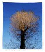Tree In Afternoon Sunlight Fleece Blanket