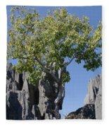Tree In The Tsingy De Bemaraha Madagascar Fleece Blanket