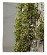 Tree Moss Closeup 2013 Fleece Blanket