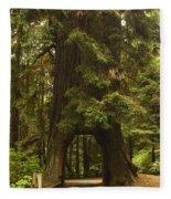 Tree Redwood Ca 7 Fleece Blanket